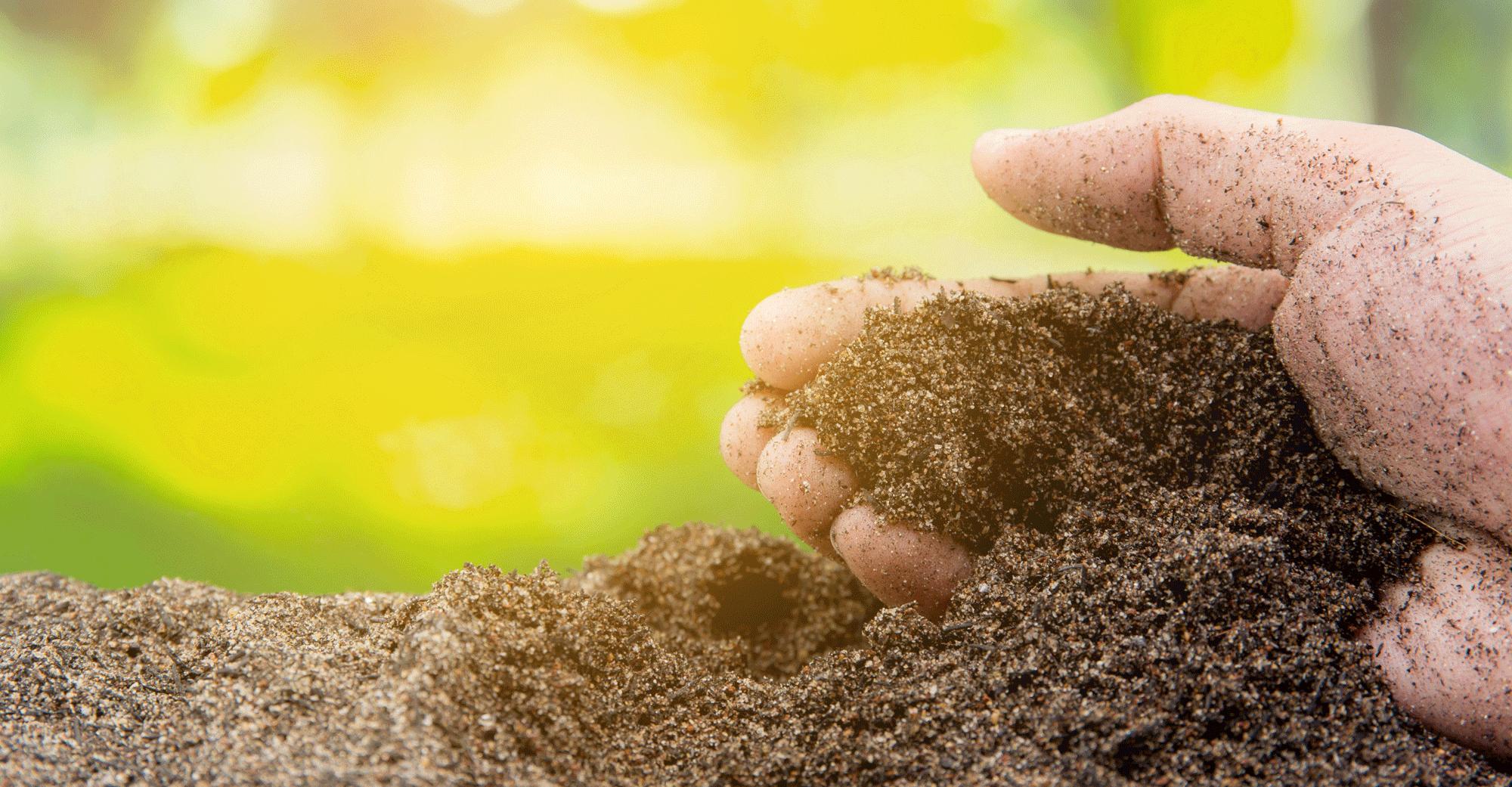 Как выбрать и подготовить почву для рассады