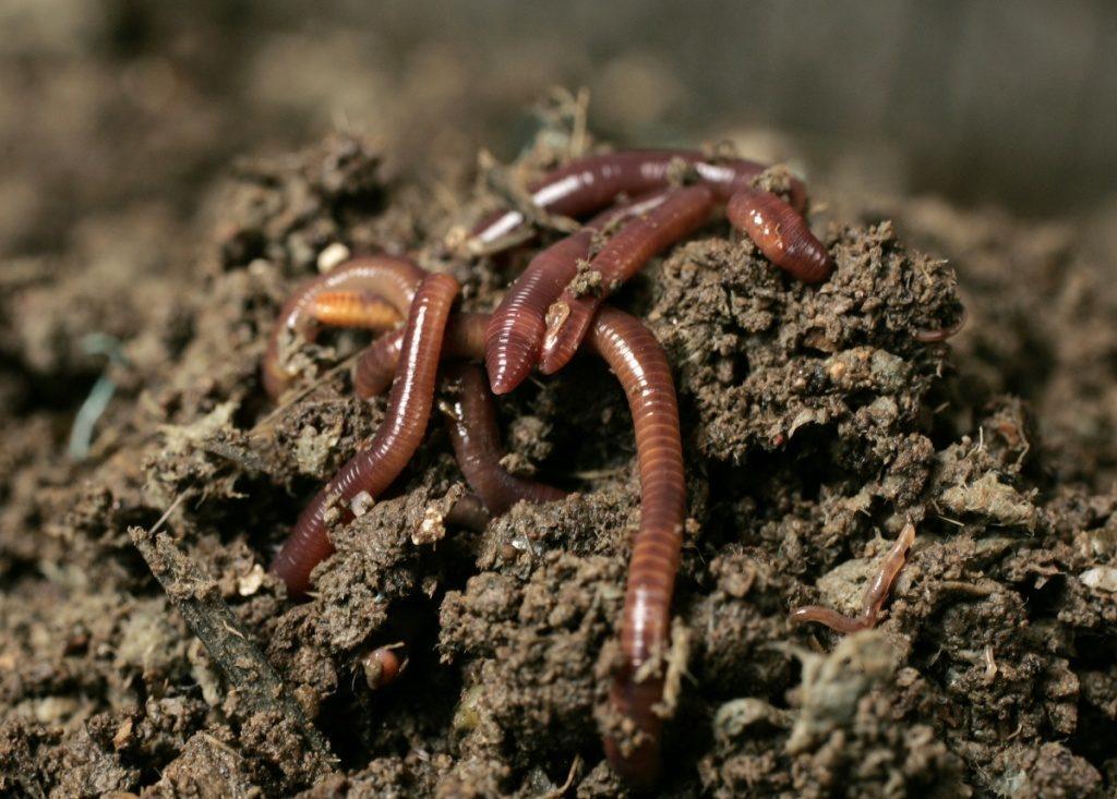 В земле черви