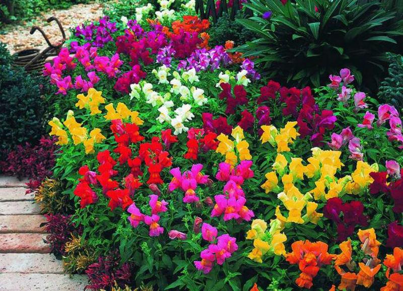 Самые неприхотливые многолетние растения