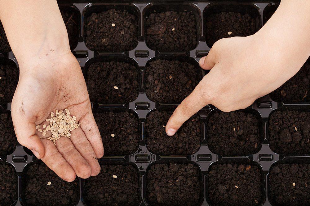 Чем обработать семена перед посадкой