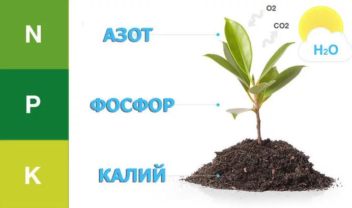 Азот фосфор калий