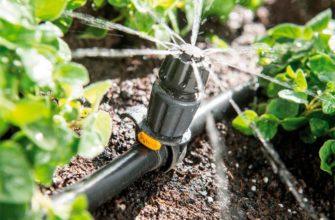 Когда и для чего эффективно применение дождевателя в вашем саду