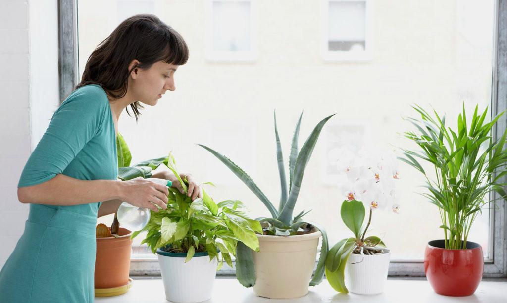 удобрение для комнатных цветов