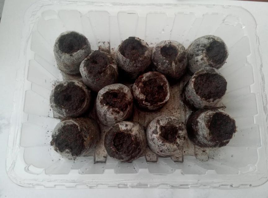 Выращивание лаватеры из семян - сроки посадки на рассаду в 2021 году