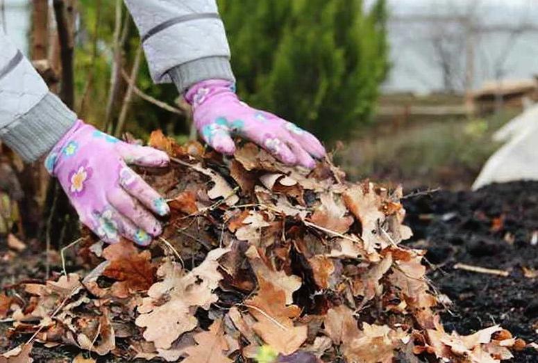 Мульчирование опавшими листьями