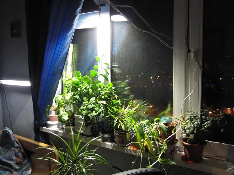 Искусственное освещение для комнатных растений