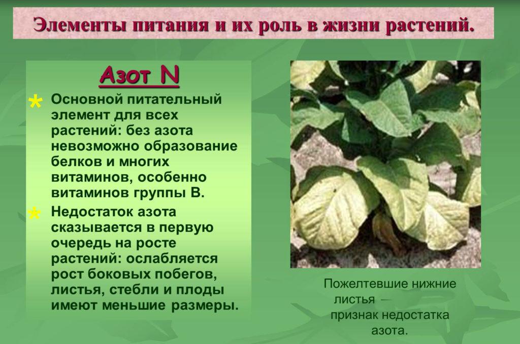 азот для растений