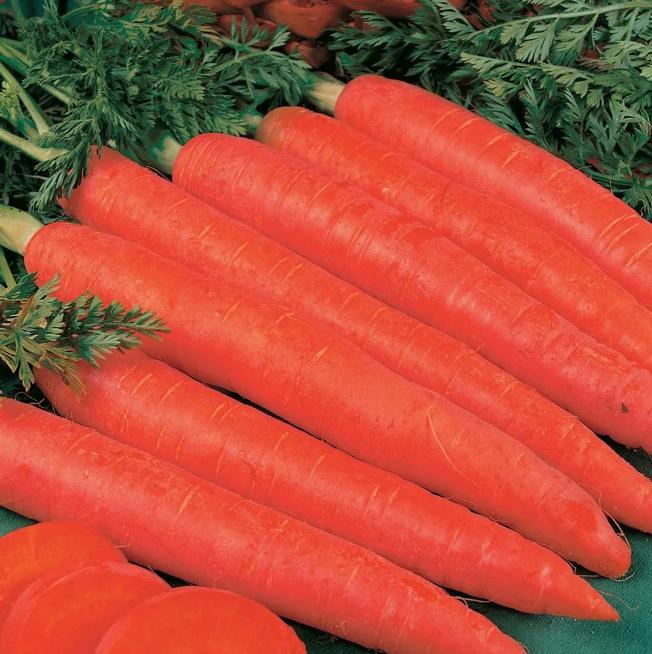 Моркоь Длиннаякрасная