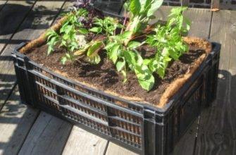 Пластиковые ящики - отличный помощник в огороде