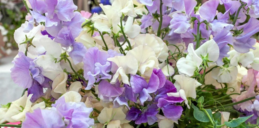 цветы срезка