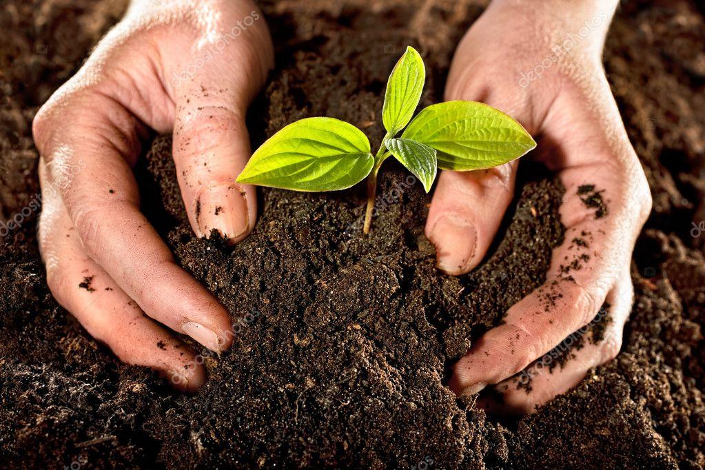 Создание плодородности почвы
