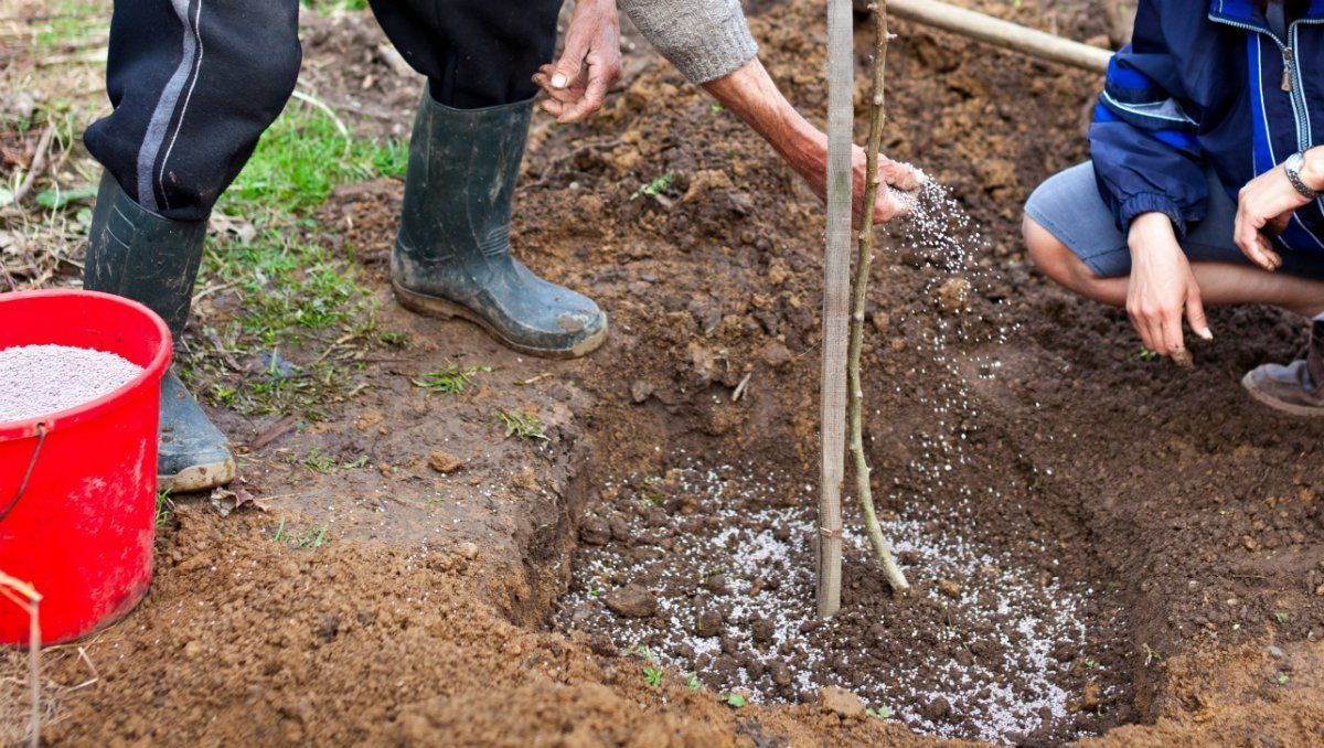 Вермикулит для плодовых деревьев и кустов