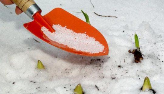 Какие удобрения раскидать в марте по снегу