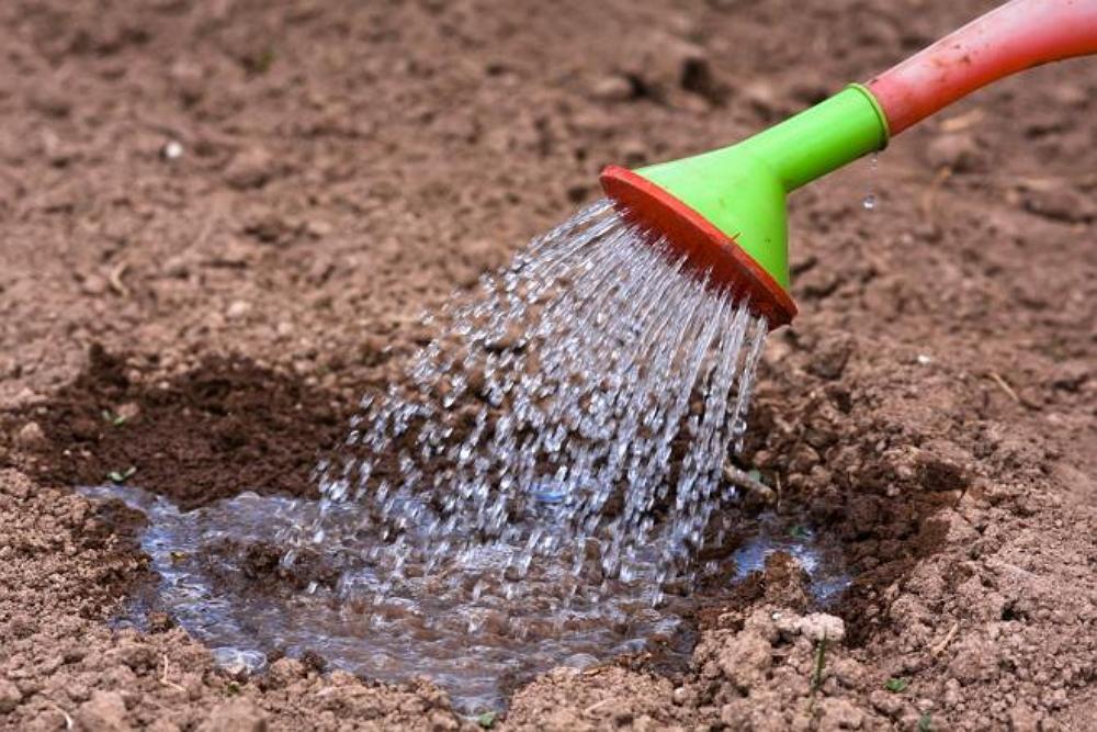 Полив почвы