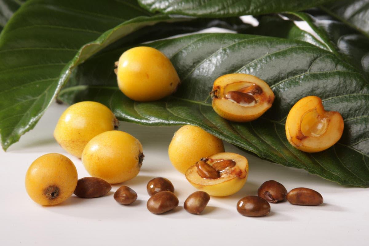 Мушмула вкусный и необычный фрукт