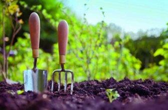 Золотые правила ленивой огородницы