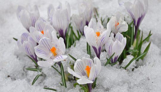 Ранниевесенниецветы