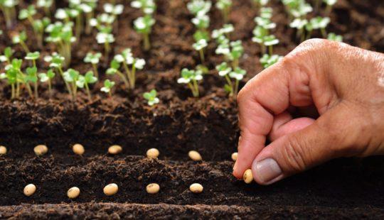 Подробная табличка посадок семян всех овощей
