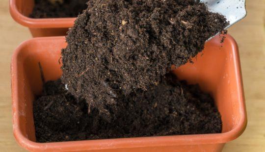 Дешёвый и плодородный грунт для рассады