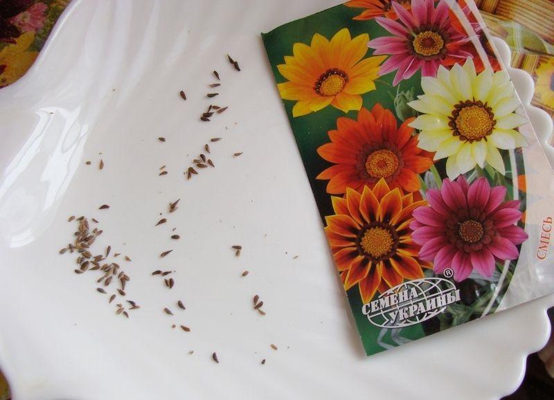 Гацания семена