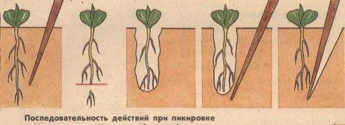 Инструкцияпо пикировке