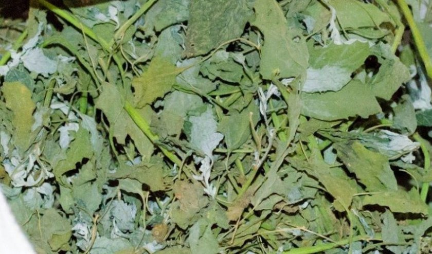 заготовка травы
