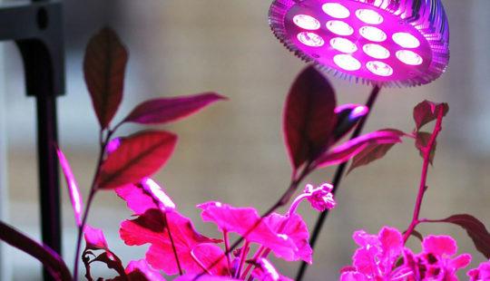 Лампа для рассады