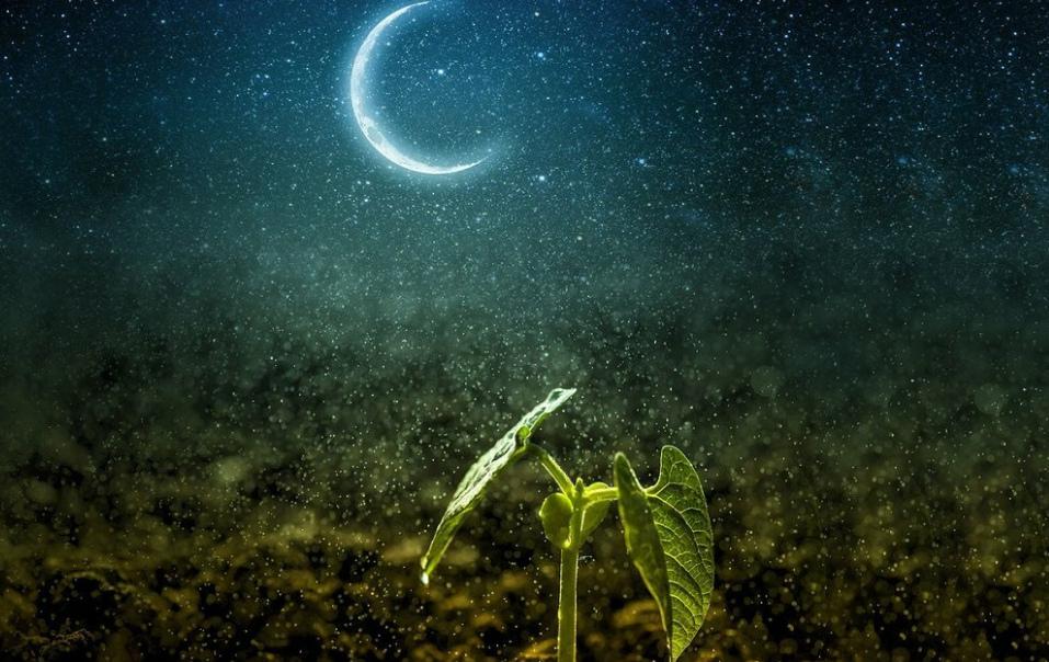 Луна и рассада