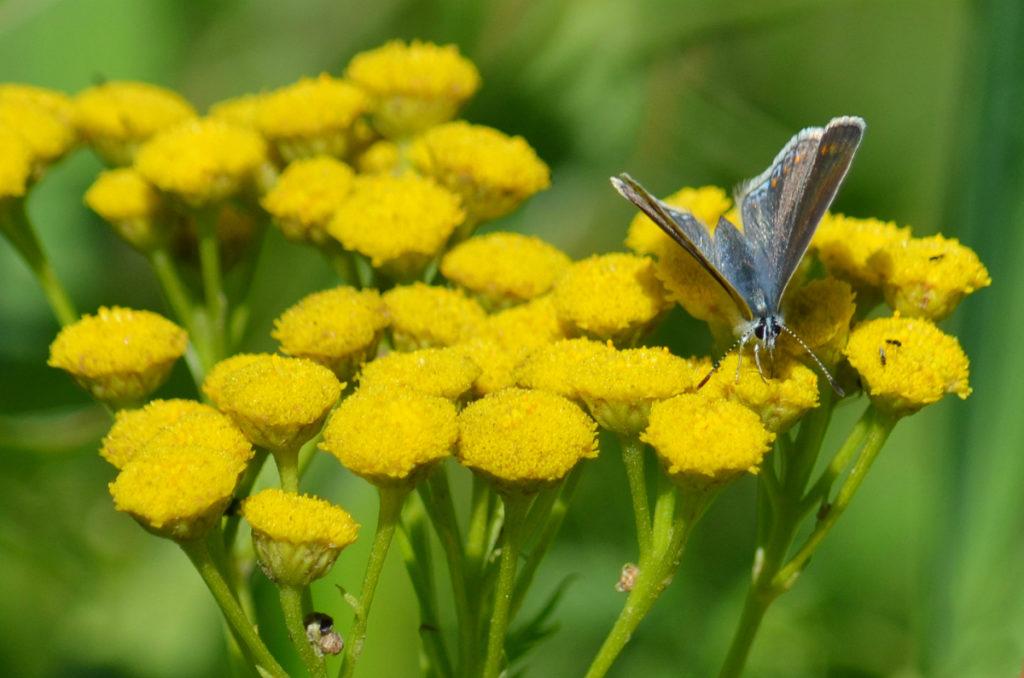 травы лечебные свойства и противопоказания