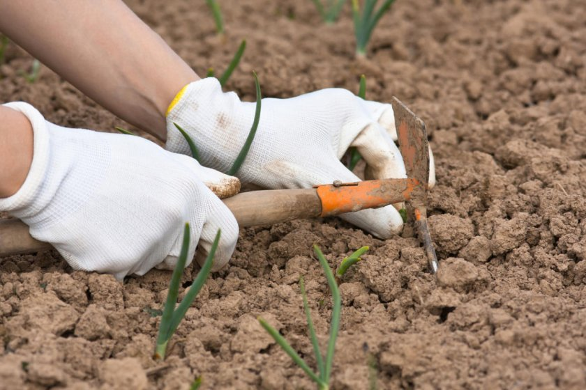 Рыхлить почву