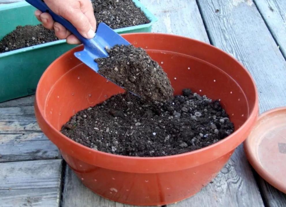 Подготовка почвы под рассаду