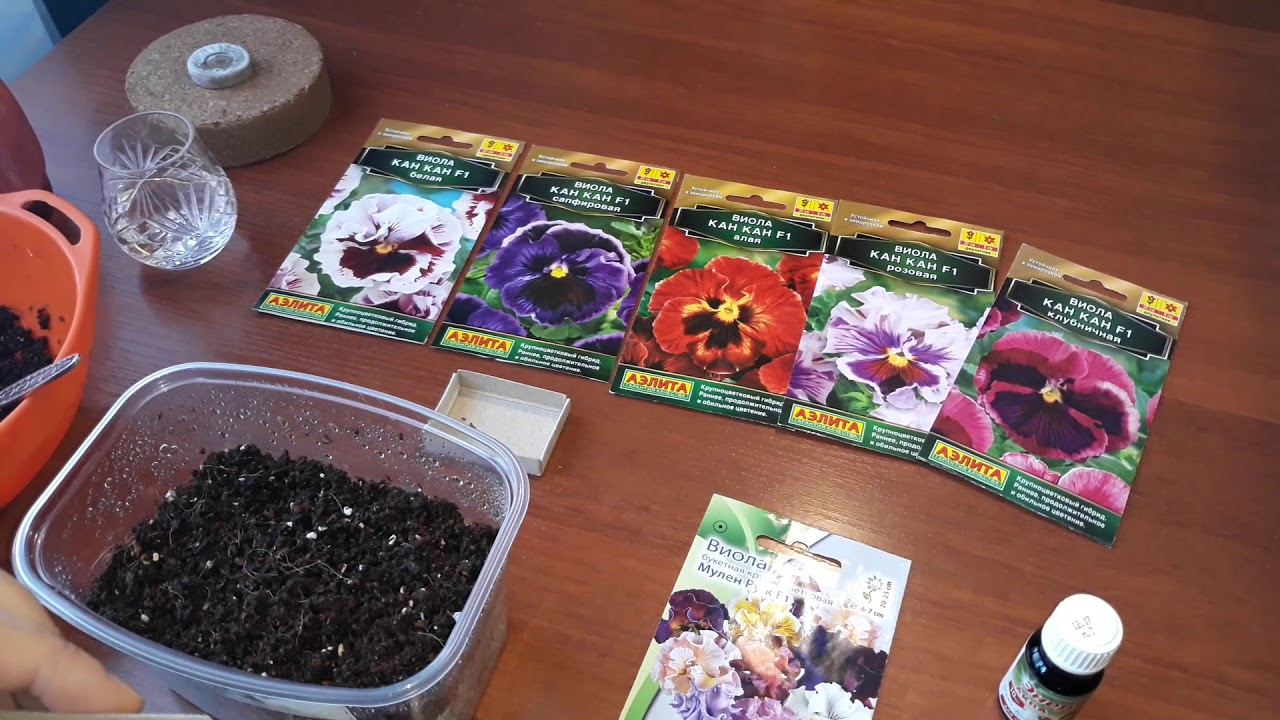 Виолы семена