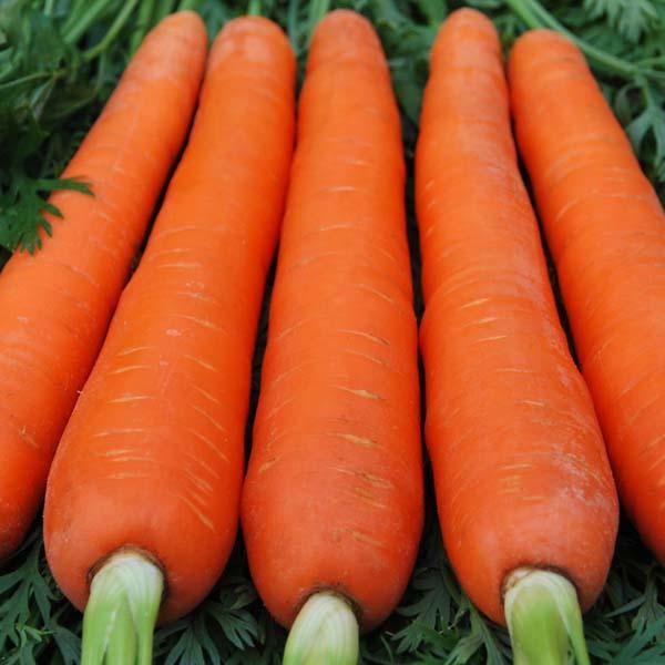 Красный великан морковь