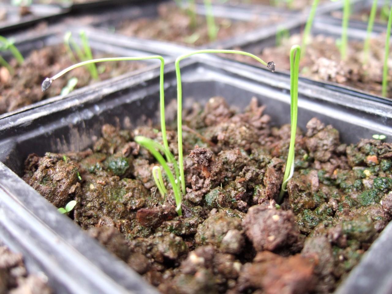 когда производить посев семян на рассаду