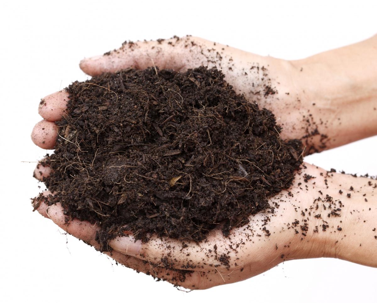 Почва для пикировки