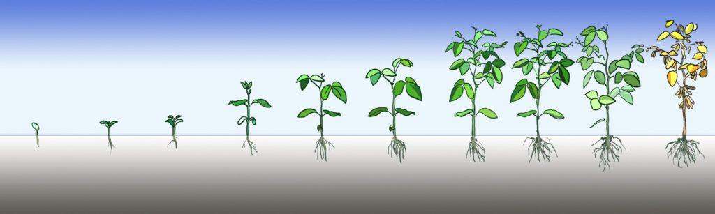 период вегетации