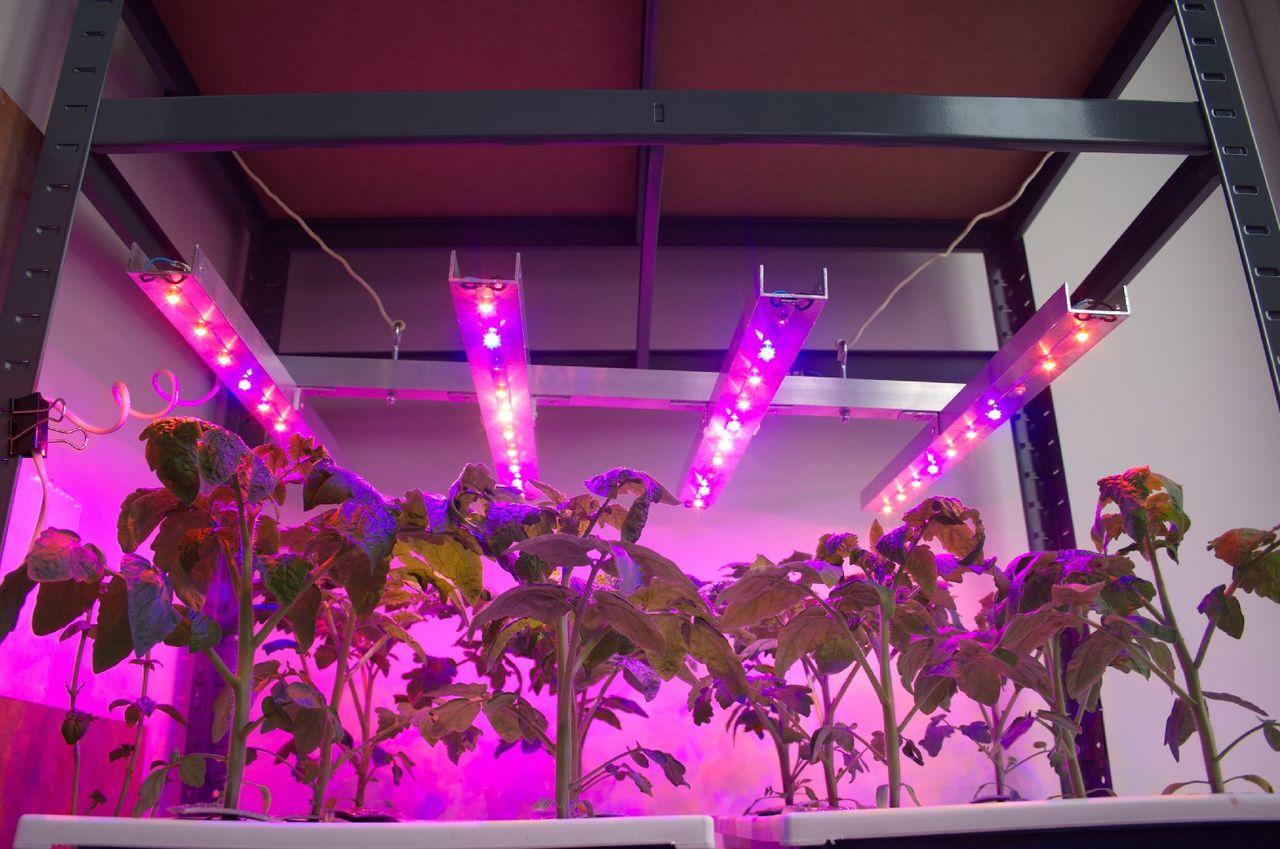 Фитолампа светодиодная для растений