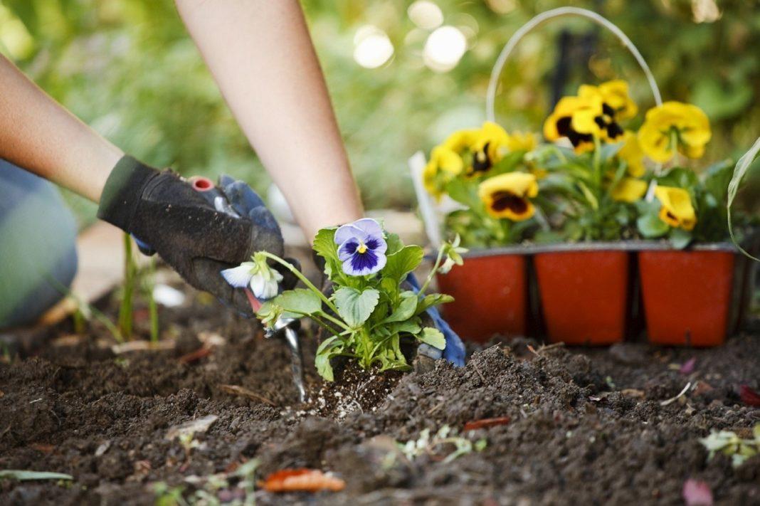 Высаживать рассаду