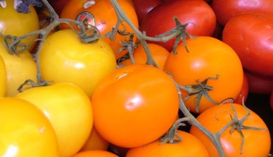 желтые и оранжевые томаты