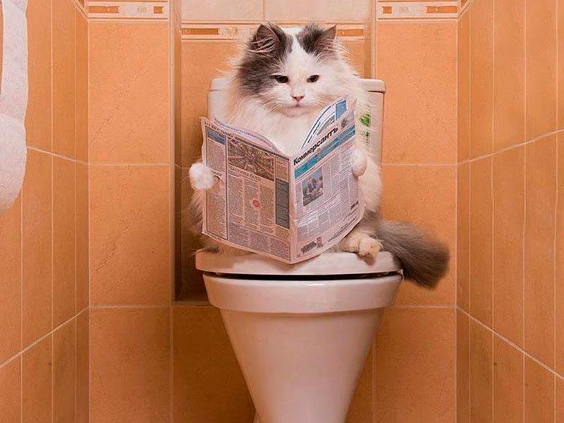 Кот сидит на туалете
