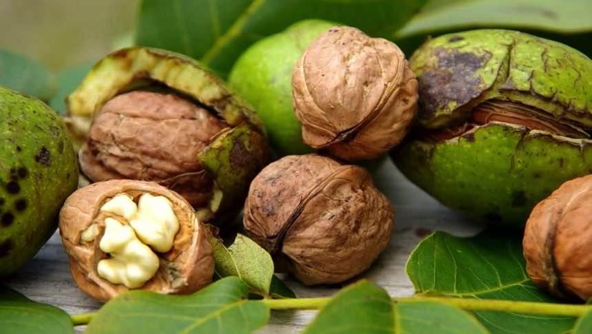 Состав зелёного грецкого ореха