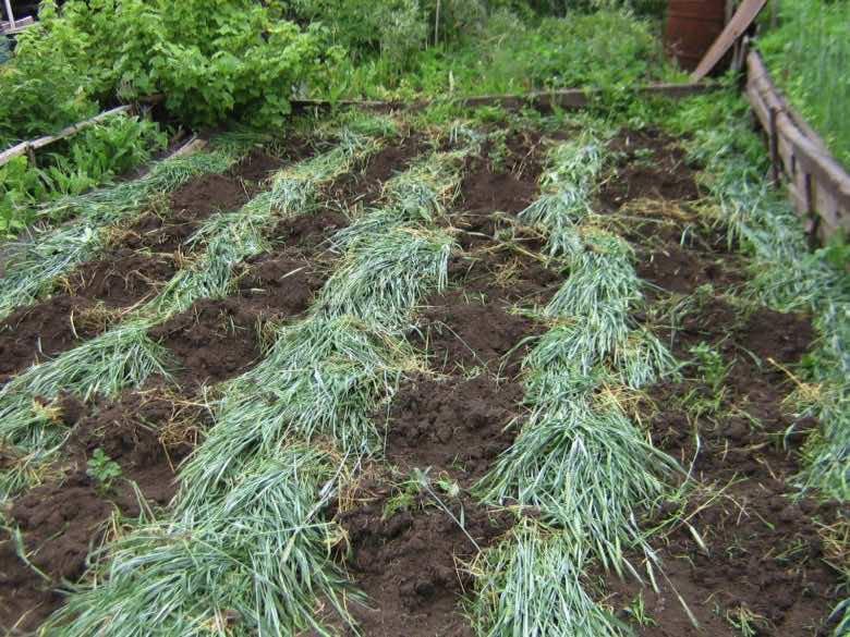 Удобрения для огорода своими руками