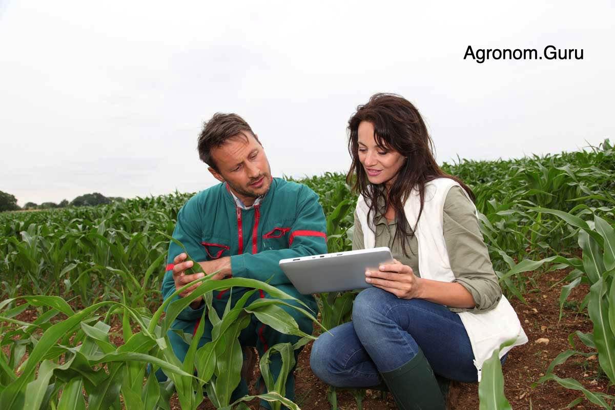 Агрономы и калиевая селитра