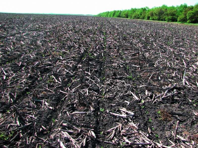 Истощенная почва